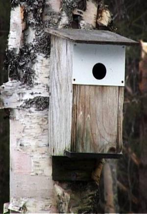 Antalet fågelholkar kommer också att öka i ekoparken.