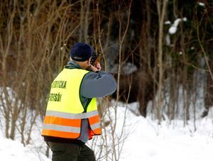 Mitt framför LT:s kamera sköts de två älgarna på Fornborgsvägen på Frösön. Älgarna stod lugnt och betade från träden när skotten föll.
