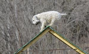 Balansen är viktigt i sådana här sammanhang konstaterar hunden Frippe.