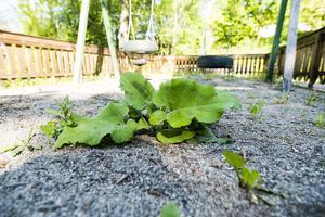 Det har även börjat växa ogräs på balkongerna.
