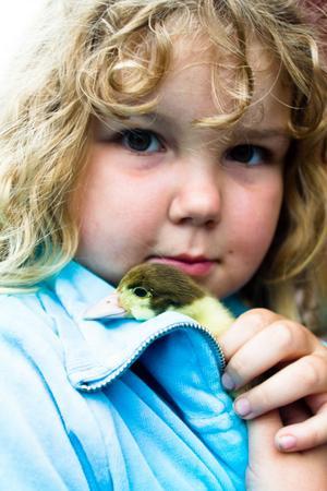 Agnes Ström, 6 år, Söderala, ville gärna hålla i en myskanka.