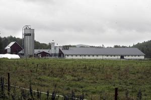 Raviks gård utanför Bergsjö är Nordanstigs största mjölkgård.