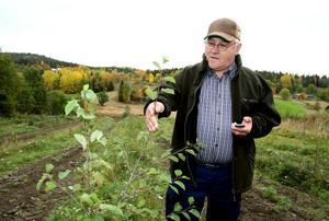 Per-Anders Skoglund har nu inte bara ett par hektar med maserbjörk. Han har dessutom som första skogsägare i Sverige satsat på masural och masurasp.