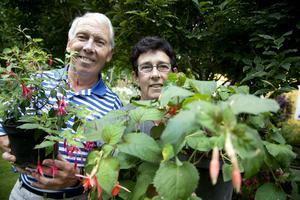Ellert och Inger Gunnarsson är berömda för att ha särskilt gröna händer när det gäller fuchsior. Det är en växt som kommer från Sydamerika och det finns cirka 10 000 sorter. I Gunnarssons trädgård finns 100 av dem.