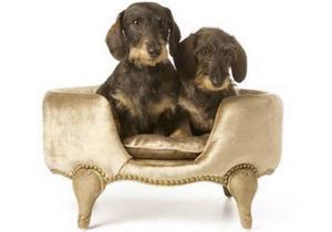 Den som inte gillar lurv kanske föredrar Marie-Antoinette hundsoffa med ekram och teflonbehandlat guldfärgat sammet. Från doggie.se, kostar 3 295 kronor.