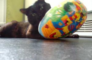 Katten Torzten som började med sitt påsk godis tidigare i år. Vissa har det bra.Foto: Madelene Stenberg