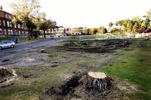 Säkrare trafik vid sjukhuset. Arbetena med en ny infart till sjukhusets parkering har börjat med fällning av ett tiotal träd. Den nya infarten är första steget i en större ombyggnad av gator, gång- och cykelvägar och busshållplatser kring sjukhuset.