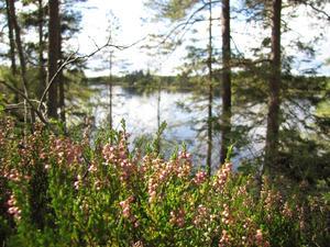 Höstsol på liten vandring på Bruksleden, fika vid en liten sjö