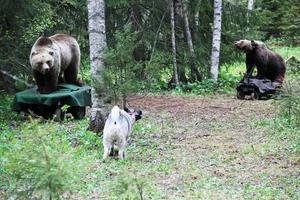 Anslagsprov med permobjörn är ett inslag på Björnens familjedag.