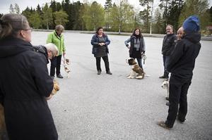 Jenny Hedin är en riktig hundnörd som hon beskriver det själv och har drivit Hundforum sedan 2011.