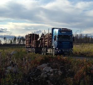 Mellanskog körde stora mängder brandskadat virke 2017. Virket användes främst som energi och sågtimmer. Foto: Tony Hidenfalk