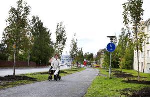 """Nu är de nya lönnarna på plats längs Stuguvägen. """"Vi kommer att behöva föryngra i fler områden i Östersund"""", säger stadsträdgårdsmästare, Nicole Lindsjö."""