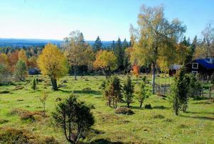 Odens välhävdade äng i Risåsa fäbodar. Lägg märke till de hamlade träden.
