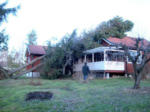 Två stora granar föll över Bo Lundins hus.