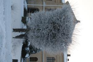 utråkad plockade jag fram kamran och fotade ett väldigt vackert träd. vintern är inte så trist när man ser vilka vackra konstverk som kan bli.