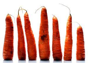Olika form. I Jordbuksverkets rapport framkommer att morötter som inte är raka sorteras ut och kastas bort.