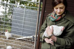 Linda Petersson byggde hönsgård och skaffade fyra höns och en tupp på sin bakgård inne i Östersund. Efter en vecka kom den första anmälan in till kommunens hälsoskyddsinspektörer.