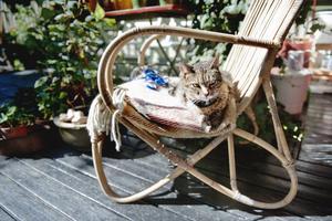 Katten Zäta lapar sol på altanen. Helt obryd av husse och mattes påtande i trädgården.