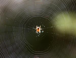 Filip Tronêt och spindlar är ingen  lyckad kombination.