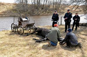 Hästens liv kunde inte räddas efter att den skenat ut i ån.