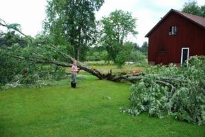Johan Hagström står vid trädet som tidigare stod upp på Gunvor Hags gård. Foto:Seth Jansson