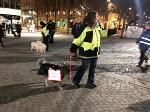 På Stora torget stannade hundägarna med sina hundar och utförde övningar – något som visade sig vara lite krångligt med 54 hundar.