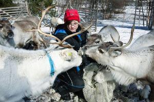"""Ellen Brita Person är 15 år och bor i Valsjöbyn. Hon är hemma på påsklov den här veckan och kan hjälpa till med familjens renar. """"Man går inte och tänker på björnfaran"""", säger hon. Men det är klart att man är orolig för kalvarna som ska födas nu i vår. Foto: Jan Andersson"""