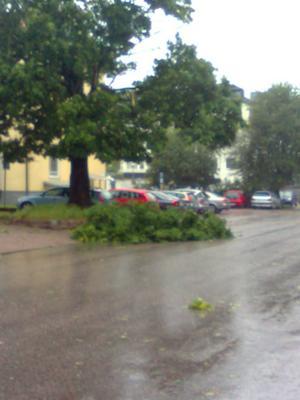 Ett träd blåste ned på Timmermansgatan i Gävle på torsdagsförmiddagen.Insänt av Sandy Nilsson