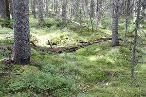 Här och där ligger lågor och blir näring åt växter och insekter.