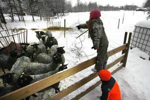 Maja, sju år, presenterar alla fåren och beskriver deras olika karaktärer.