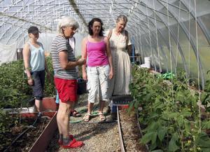 Inger Holmberg (närmast kameran) visade deltagarna i Holas ekobrukskurs sina odlingar på Allsta gård i Bjärtrå. Bland annat tittade man in i växthuset där olika sorters tomater växer för fullt.