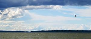 Vid en utflykt till Ängsö häromveckan så fotograferade jag molnen. Det var stackmoln och tunga regnmoln om vartannat. Plötsligt kom en skrattmås flygande, och den liksom