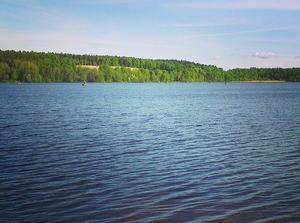 Abborren i Bysjön i Borlänge innehåller höga halter av perfluorerade ämnen.