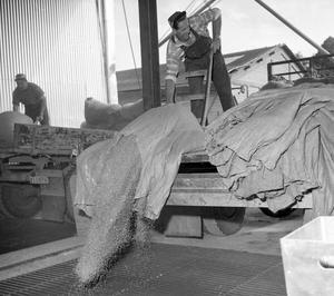 Hamnen 1959.