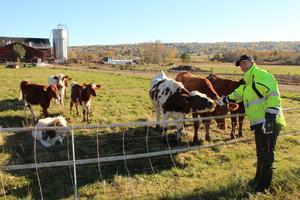 – Vi vill ju fortsätta för det är det här vi är bra på, säger Malin Sundin, om familjens mjölkgård på Näset i Orsa.