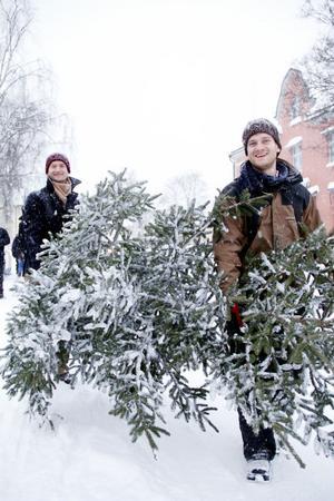 Marcus och Richard Andersson passade på att fynda en julgran.
