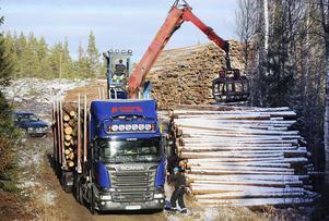 Magnus Olsson Wänn lastar i skogarna runt Ytterhogdal.