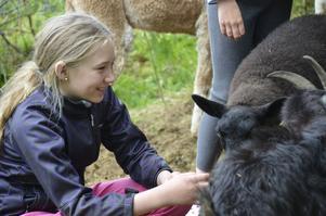 Sofie Andersson, 12 år från Ervalla, hälsar på får och getter i Klockarsgårdens hage.
