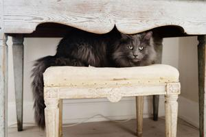 Detta bord har aldrig varit övermålat utan har stått på en släktgård i 200 år. Den är gjord vid sekelskiftet och benen är gustavianska. Men underredet har en svängd svängd rokokoform. På den gustavianska taburetten vilar katten Skaj, 6 år.