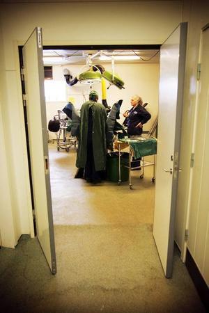 – Häst är ett trevligt djurslag att hålla på med, säger Lars-Göran Dahl när Ingegärd Pärsson hjälper honom på med den gröna operationsklädseln.I operationssalen tar det 45 minuter att genomföra Eddiestones operation.