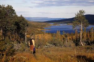På vandring mot fjällöringen väster om Blomhöjden i norra Jämtland.