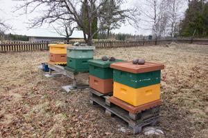 Bikuporna som fraktades från skärgårdsön med bin och allt gav 100 kilo honung förra året.