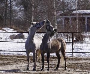 Vårkänslor även i hästhagen :-)