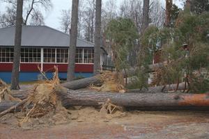 Flera tallar knäcktes i stormbyarna tidigt på annandagens morgon.