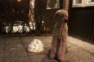 Vår hund poserade gärna vid snölyktan.