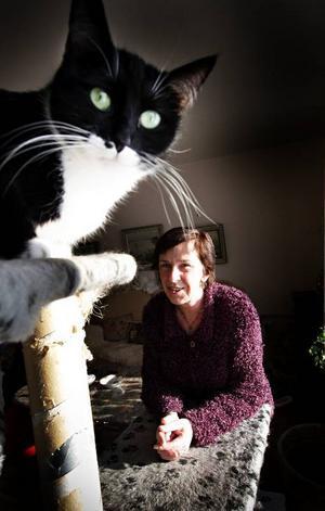 Edina som gick ute i månader kring Ede, Brunflo är Inger Bohmans senaste katt. Edina äter p-piller men ska så småningom kastreras som de övriga katterna. Vid ÖP:s besök drog sig alla katter  undan till undervåningen, utom Edina och Vilda Matilda.