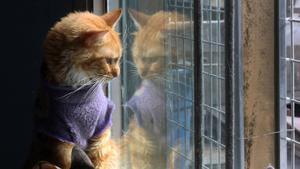 Katt som bor på katthem.