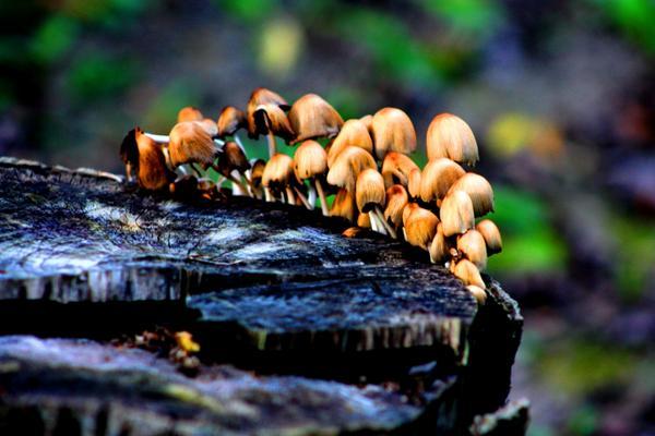 små svamperna efterleva även på resterna av ett träd.