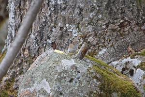 Det här fick vi se ,under en fikarast i skogen.