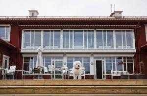 24 personer och en hund jobbar på hospicet i Sundsvall. Leo fick jobbet tack vare att hans matte är chef men de övriga fick det i hård konkurrens. 800 personer sökte jobben när hospicet skulle starta.